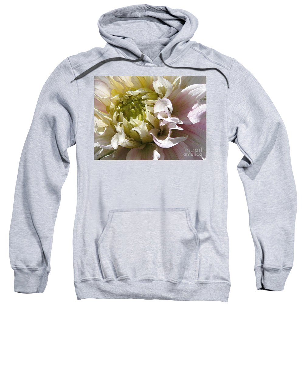 Dahlia Sweatshirt featuring the digital art Dahlia Named Strawberry Ice by J McCombie