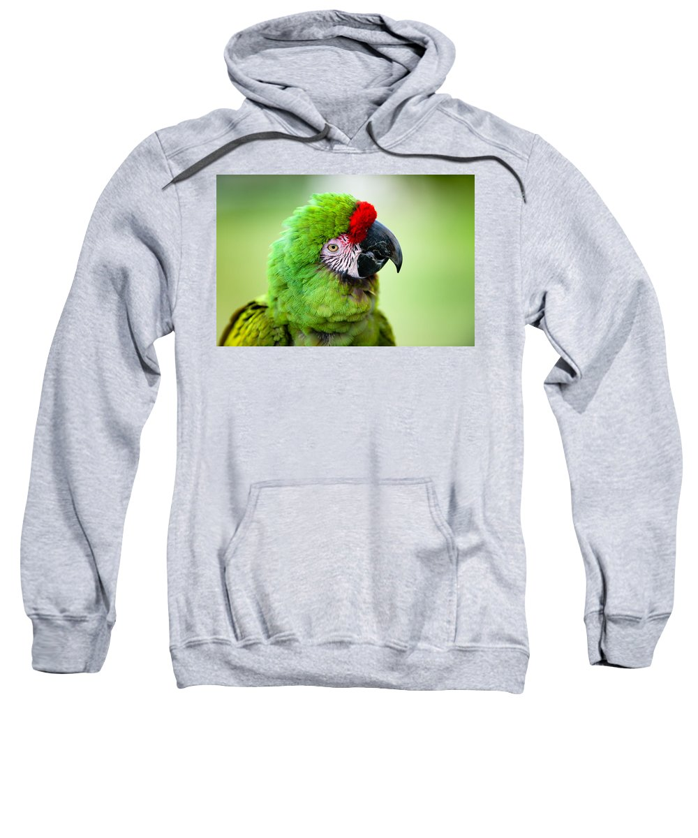 Parrot Sweatshirt featuring the photograph Parrot by Sebastian Musial
