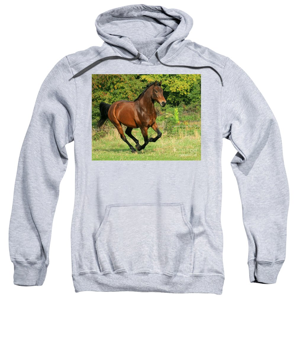 Horse Sweatshirt featuring the photograph Running Free by Angel Ciesniarska