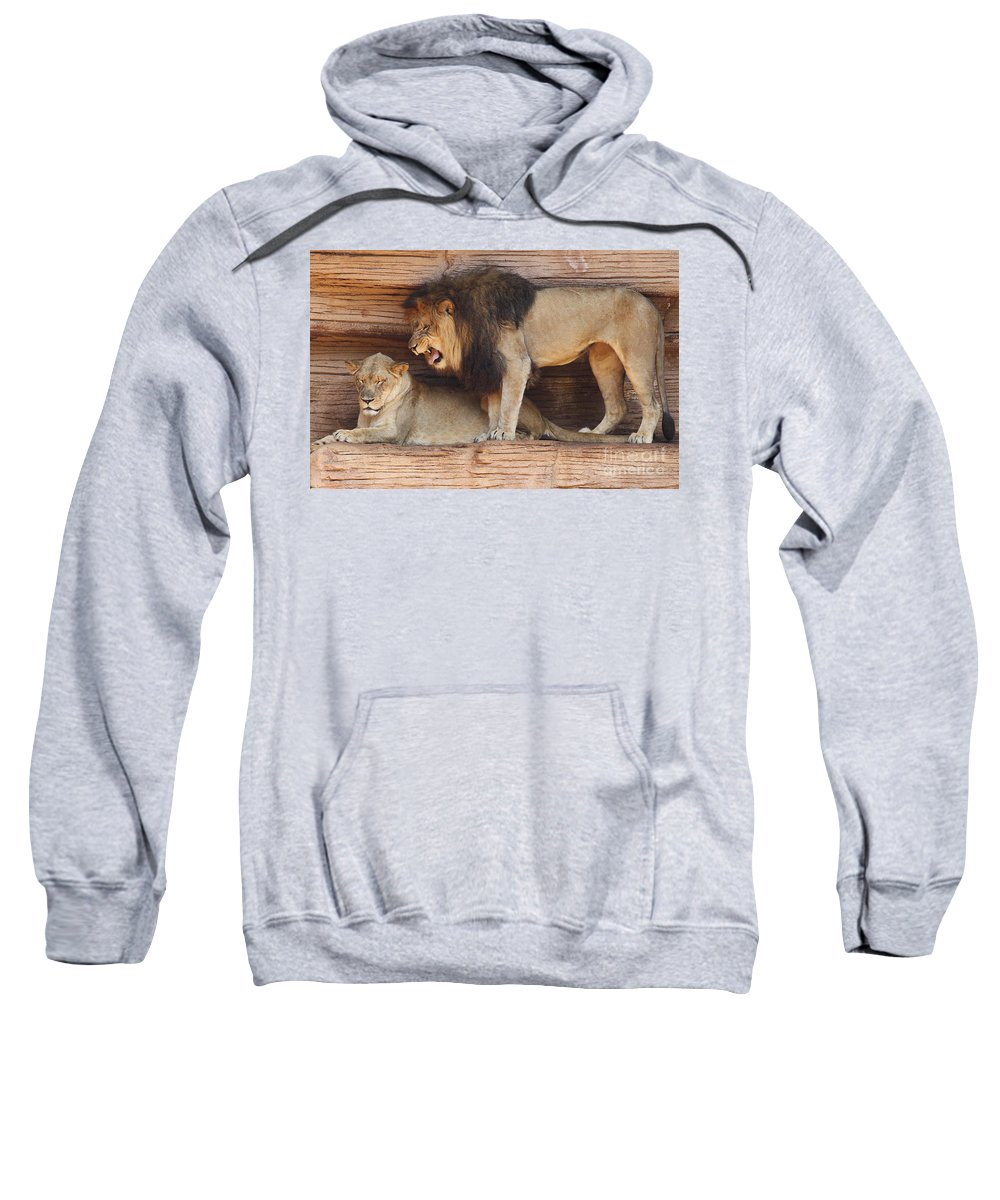 African Sweatshirt featuring the photograph The Feline Honeymooners by Kevin McCarthy