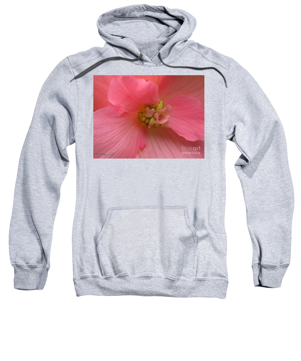 Begonia Sweatshirt featuring the photograph Begonia Named Nonstop Pink by J McCombie