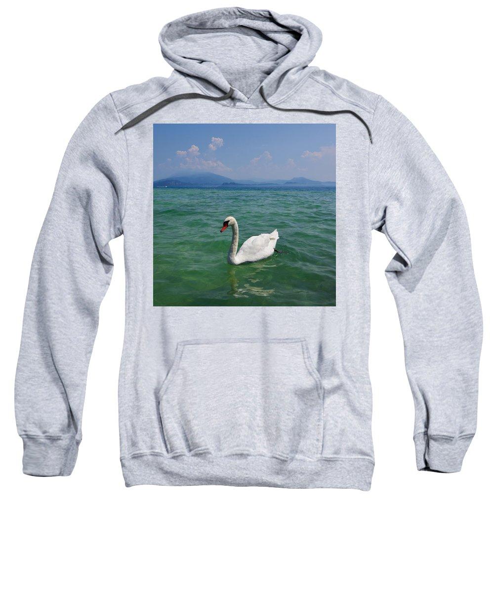 Cygnus Olor Sweatshirt featuring the photograph Mute Swan. Sirmione. Lago Di Garda by Jouko Lehto
