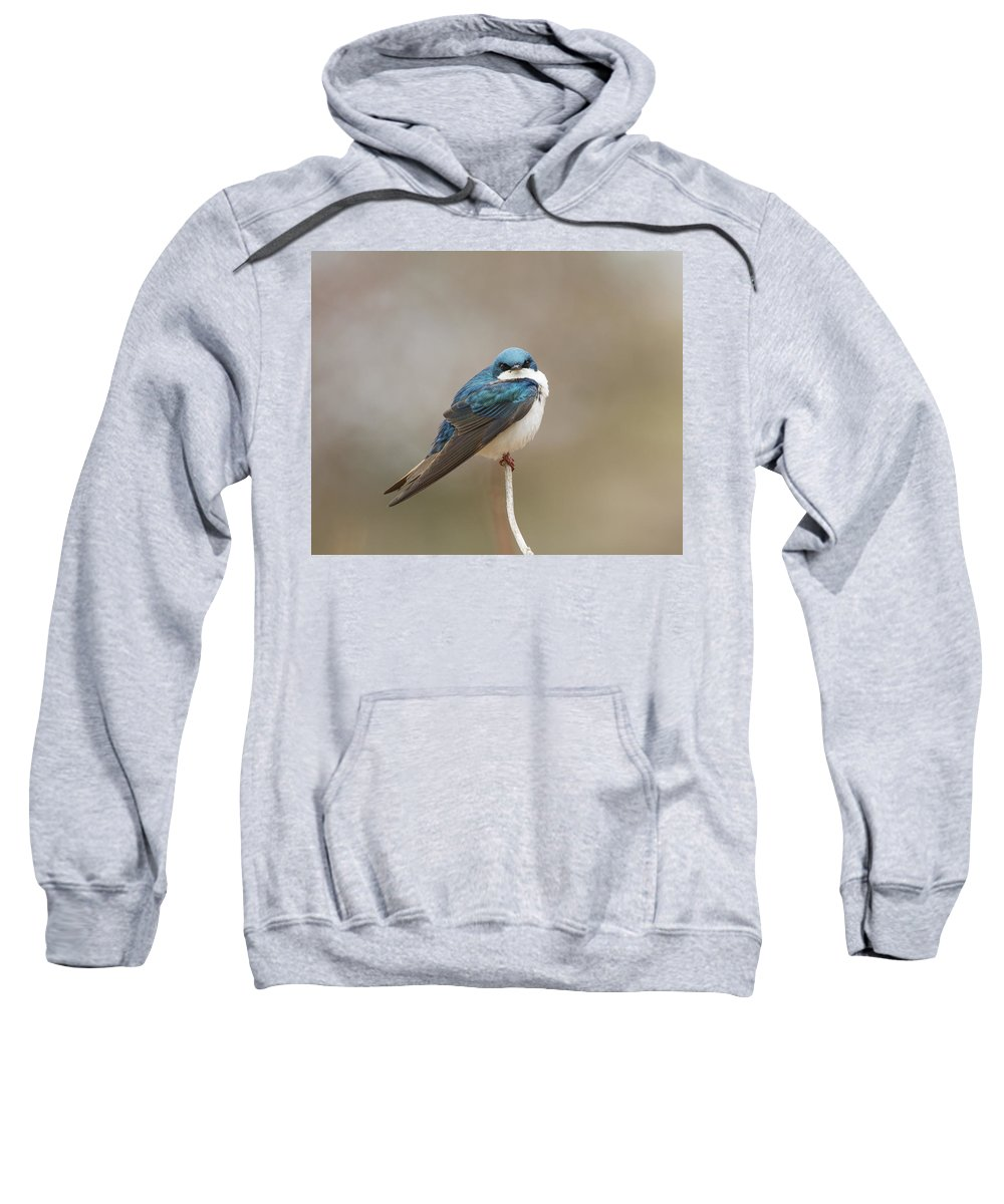 Doug Lloyd Sweatshirt featuring the photograph Say What by Doug Lloyd