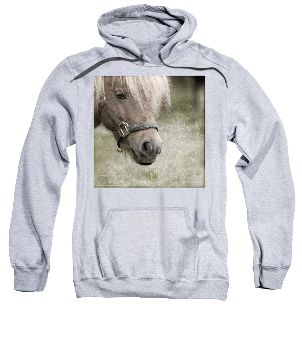 Horse Sweatshirt featuring the photograph The Look by Angel Ciesniarska