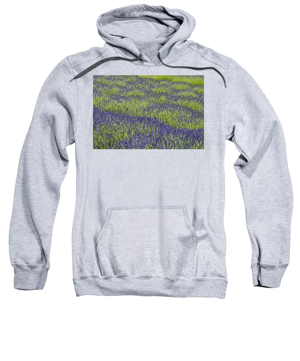 Agriculture Sweatshirt featuring the photograph Lavendar Field Rows Of White And Purple Flowers by Jim Corwin