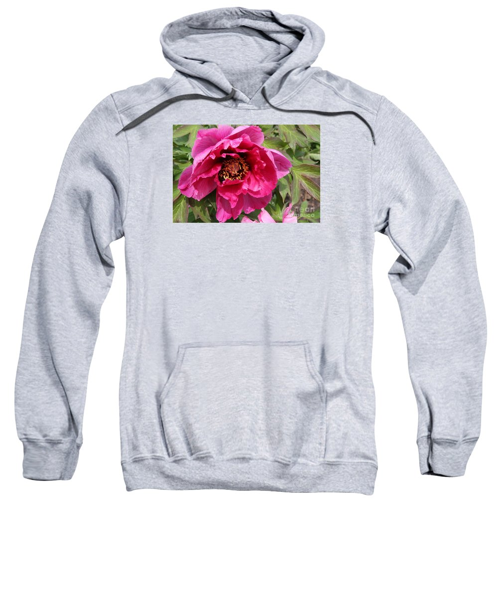 Peonies Sweatshirt featuring the photograph Pink Peony by Christiane Schulze Art And Photography