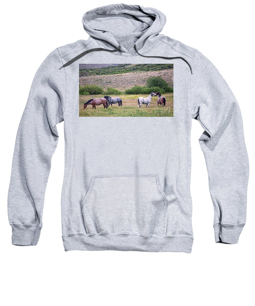Horses Sweatshirt featuring the photograph A Family Squabble by Jim Garrison