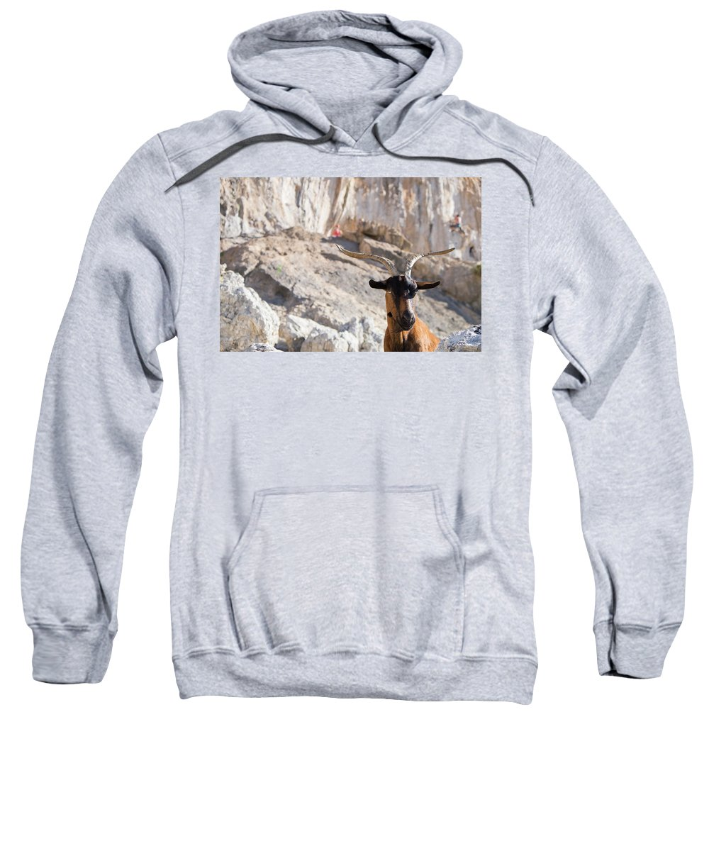 Wildlife Sweatshirt featuring the photograph A Goat Hanging Out At The Base by Mike Schirf
