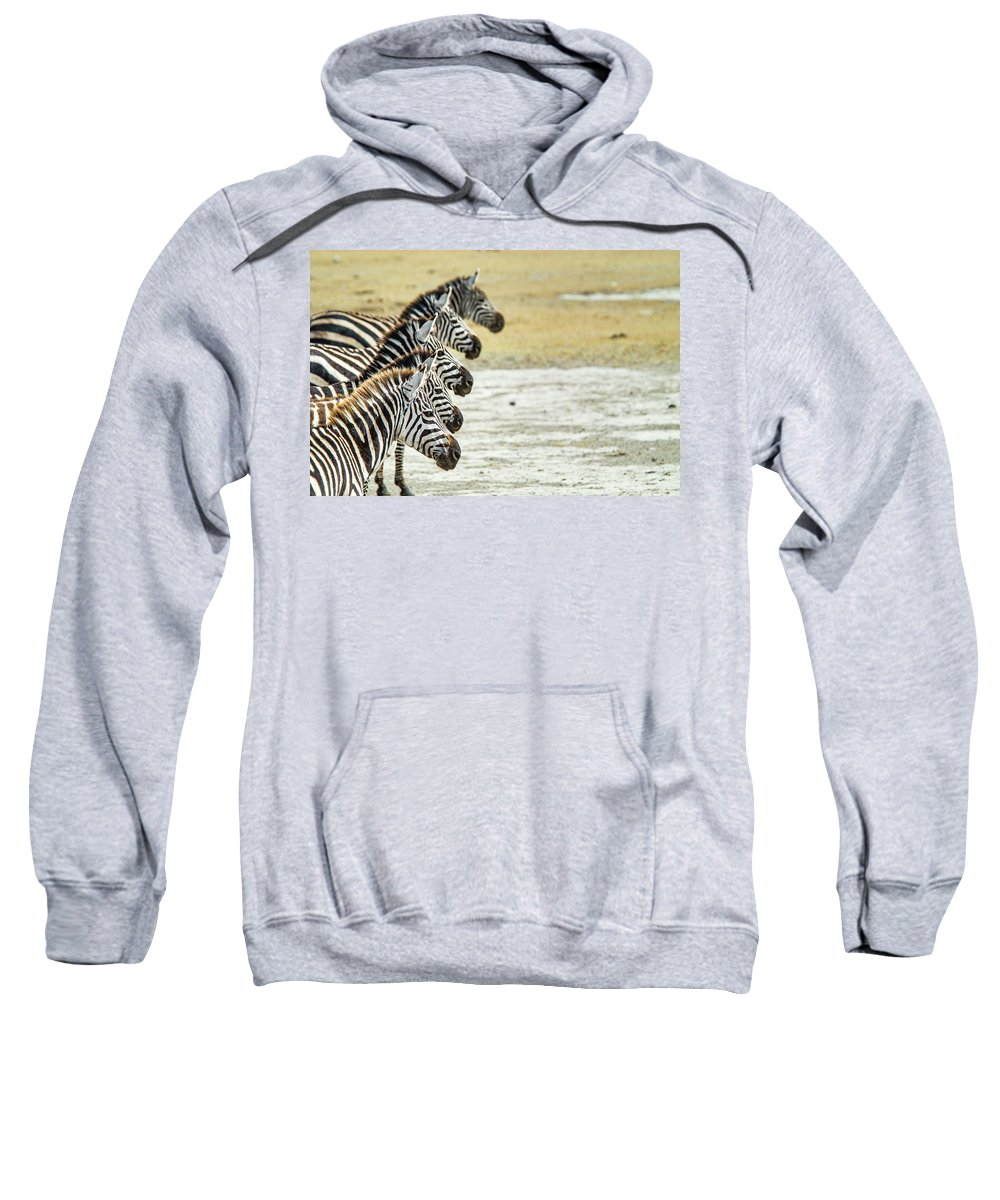 Nobody Sweatshirt featuring the photograph A Grevys Zebra In Ngorongoro Crater by Jake Norton