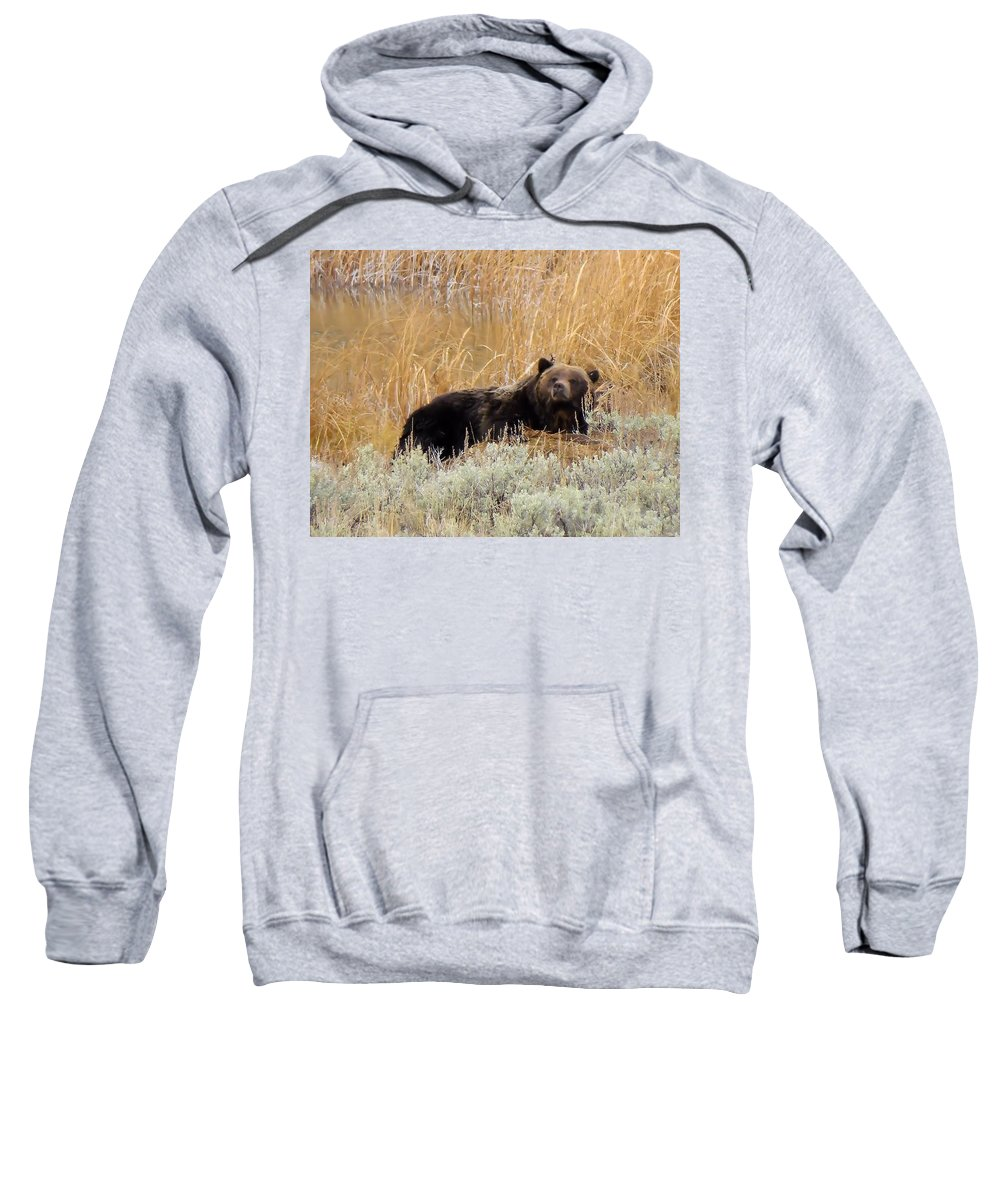 Bear Sweatshirt featuring the photograph A Grizzily On A Buffalo Carcass by Jeff Swan