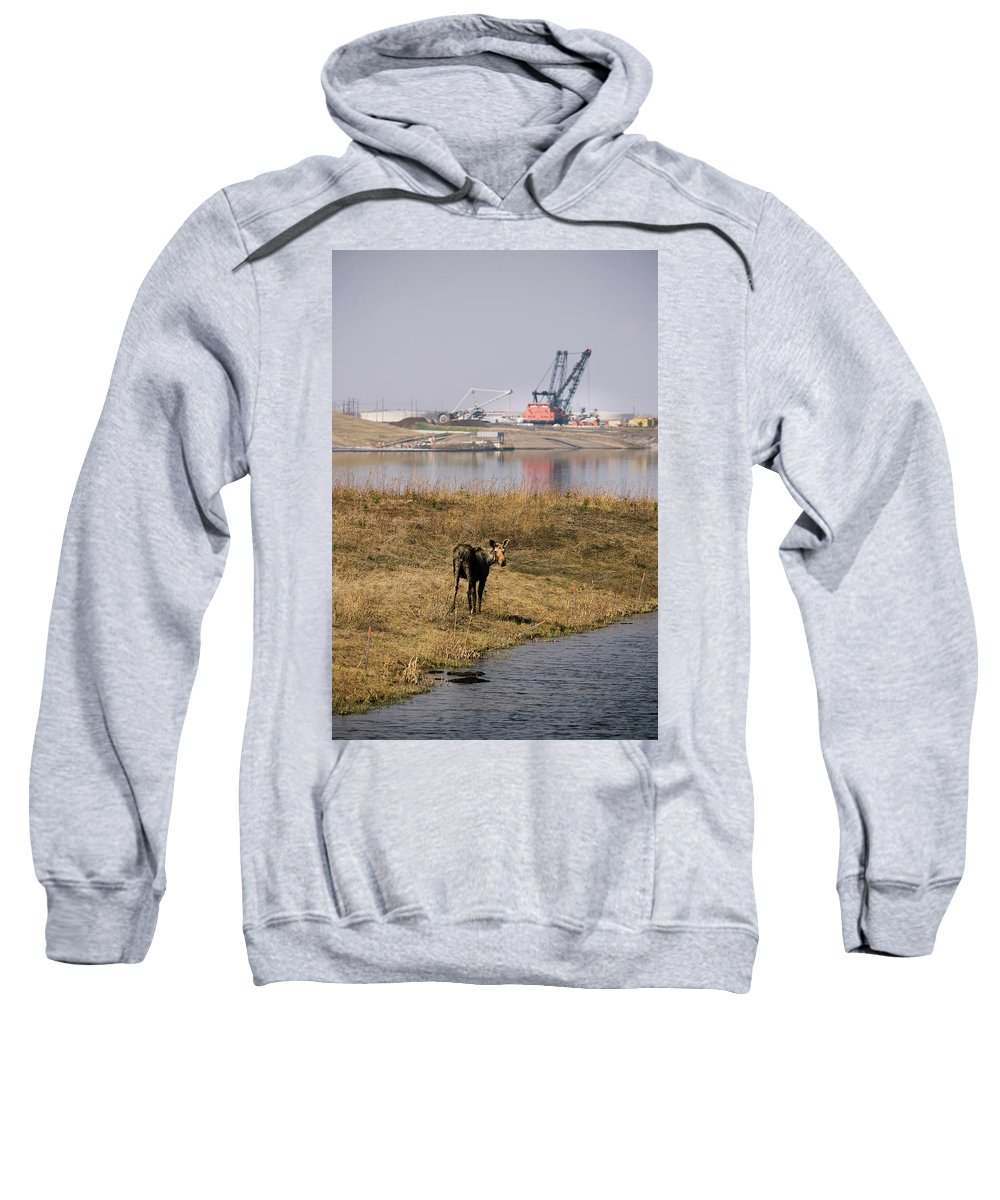 Alberta Sweatshirt featuring the photograph A Moose Walks On The On Reclaimed Land by Todd Korol