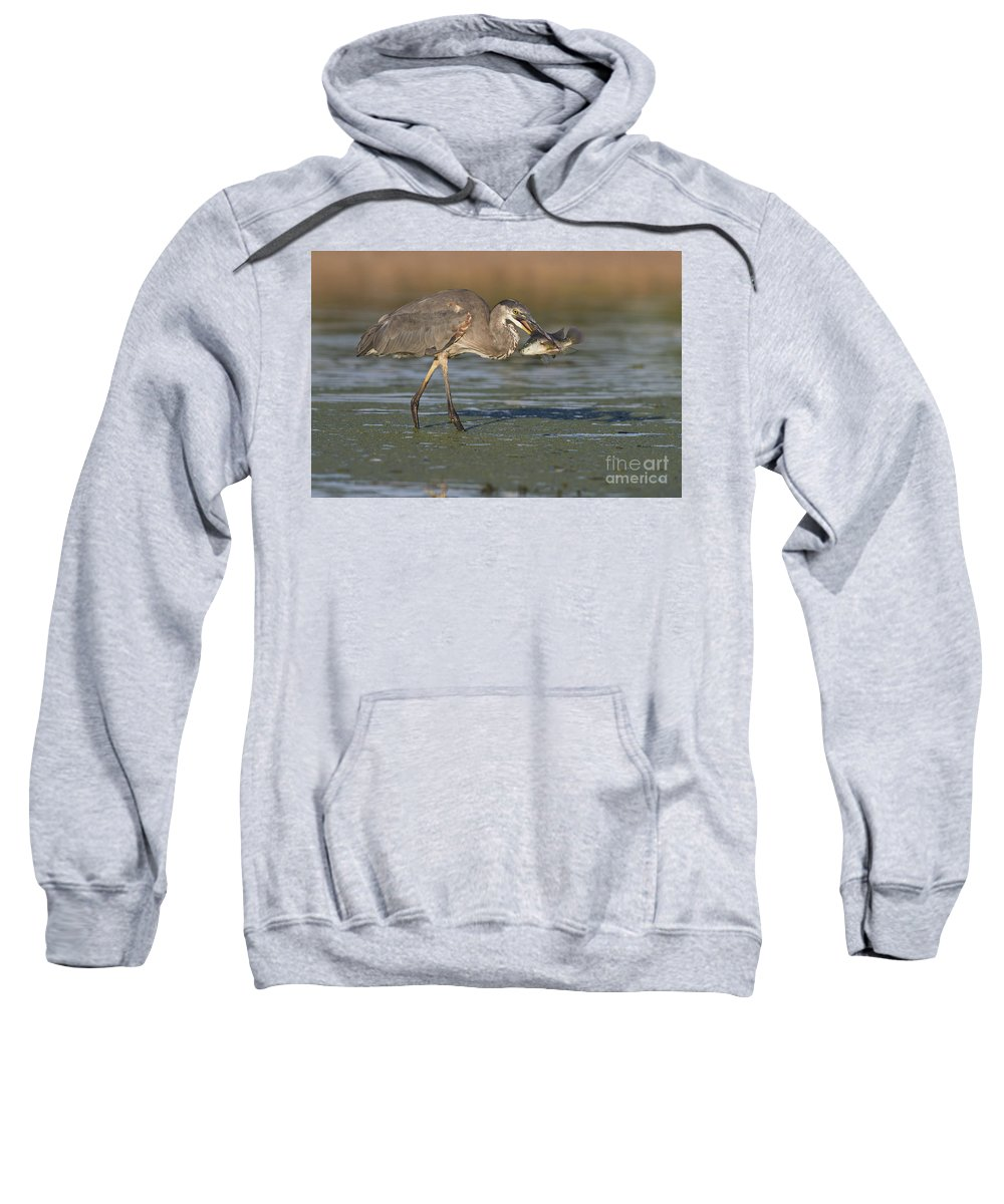 Gbh Sweatshirt featuring the photograph A Mouthful by Bryan Keil