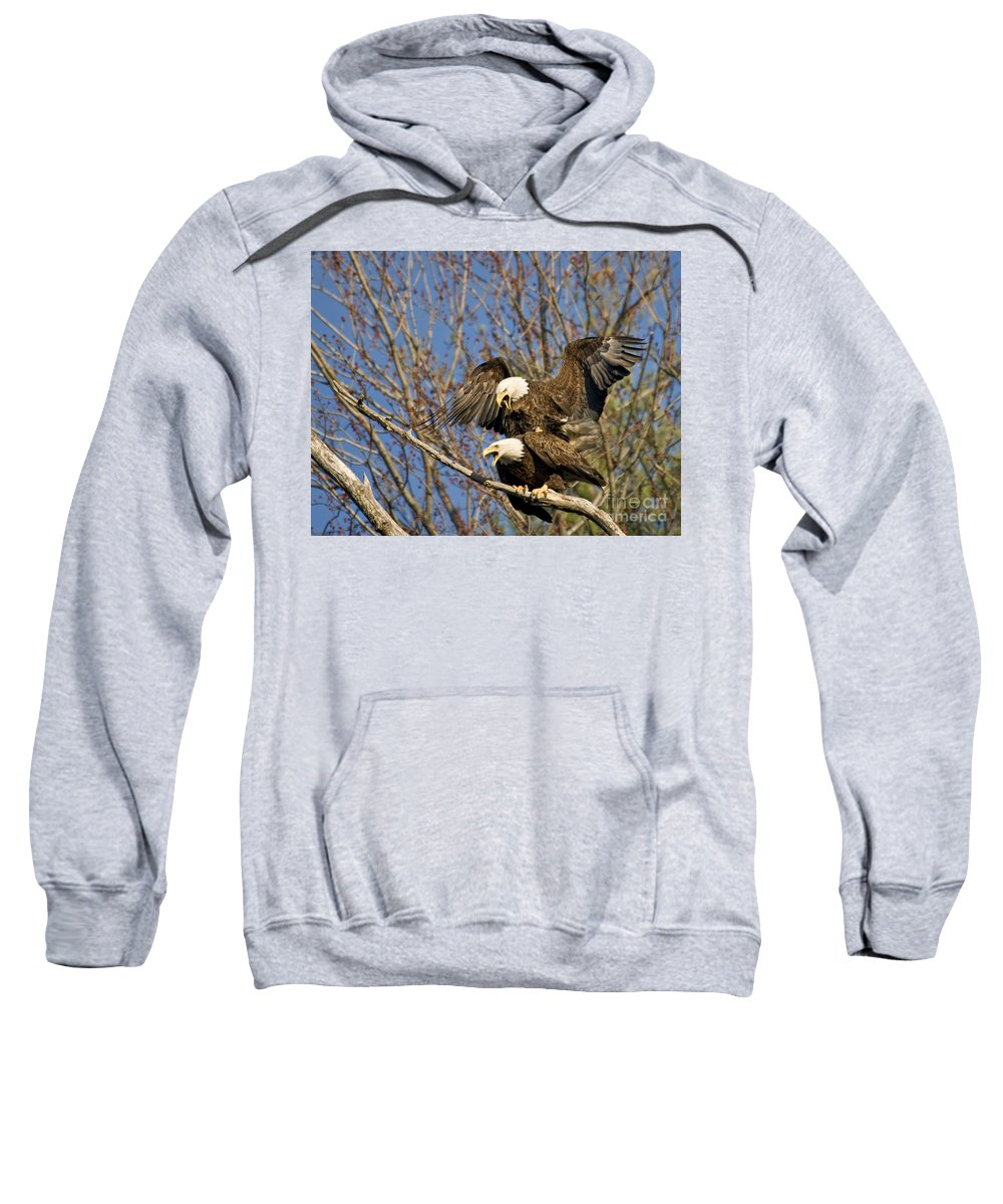 Mating Sweatshirt featuring the photograph A Noisy Pair by Claudia Kuhn