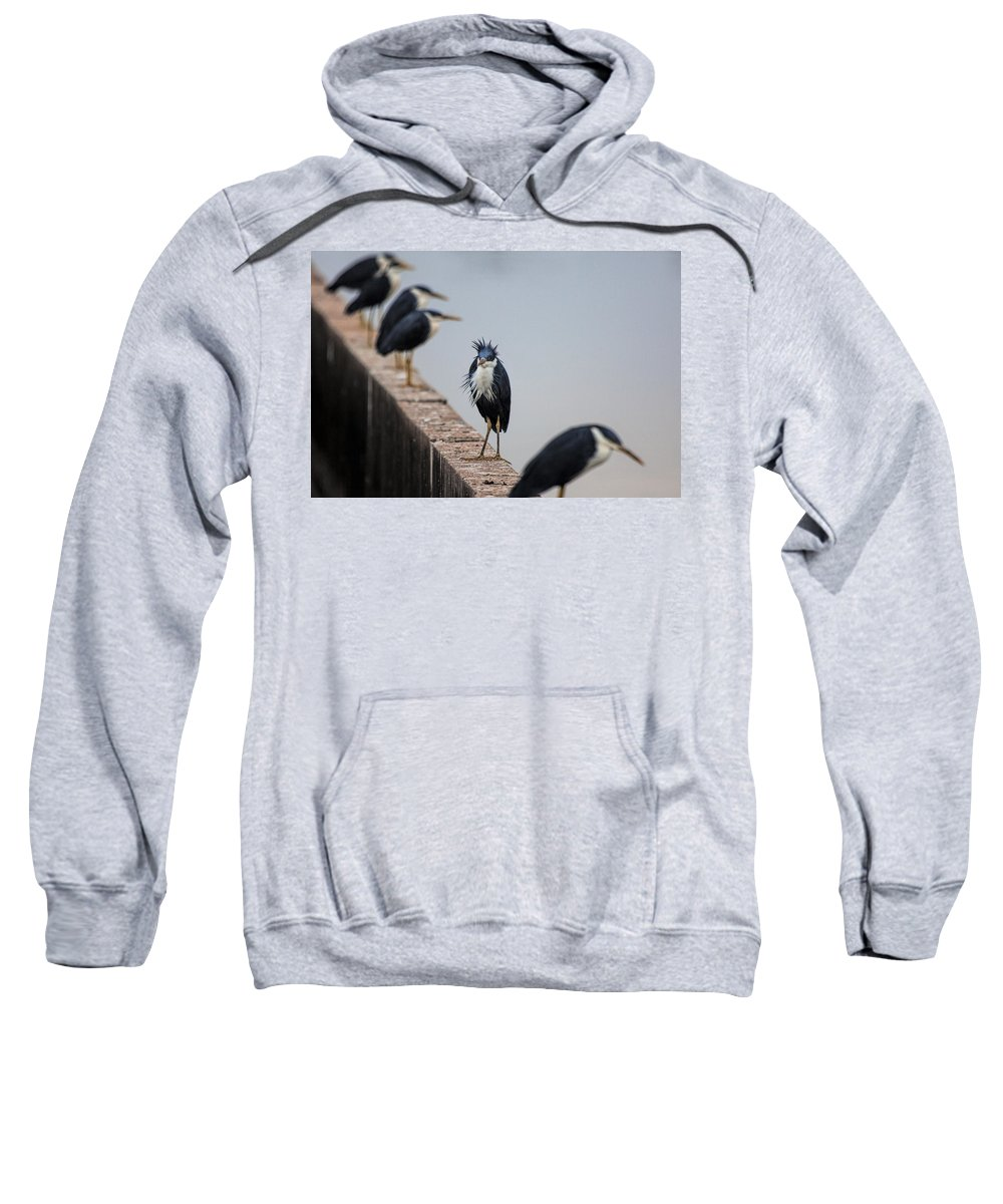 Pied-herons Sweatshirt featuring the photograph A Real Bad-hair Day by Douglas Barnard