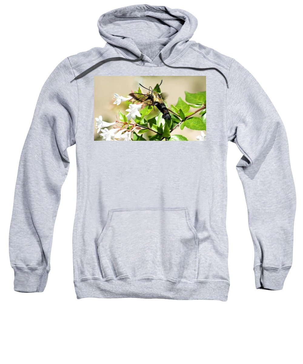 Sphinx Sweatshirt featuring the photograph A Sphinx's Pollination by Maria Urso