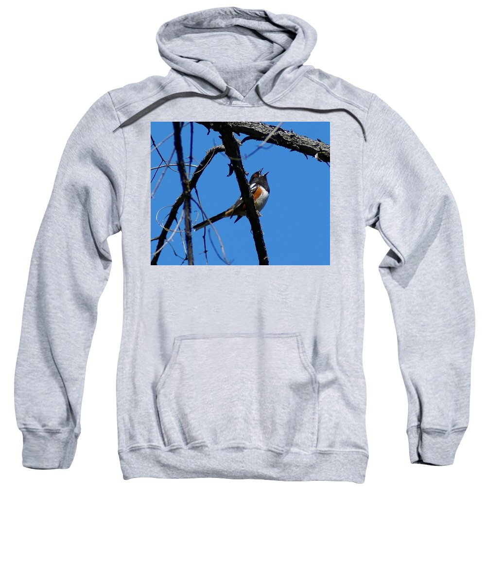 Birds Sweatshirt featuring the photograph A Spotted Towhee Mid-song by Ben Upham III
