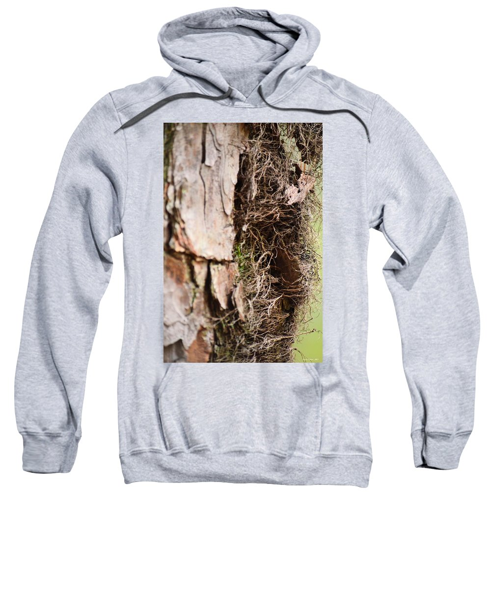 Tree Sweatshirt featuring the photograph A Treetrunk Abstract by Maria Urso