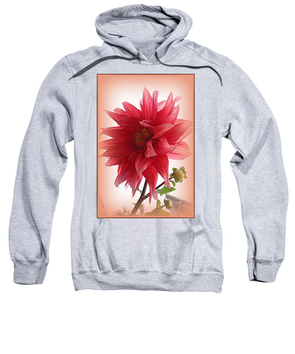 Dahlia Sweatshirt featuring the photograph A Vision In Coral - Dahlia by Dora Sofia Caputo Photographic Design and Fine Art