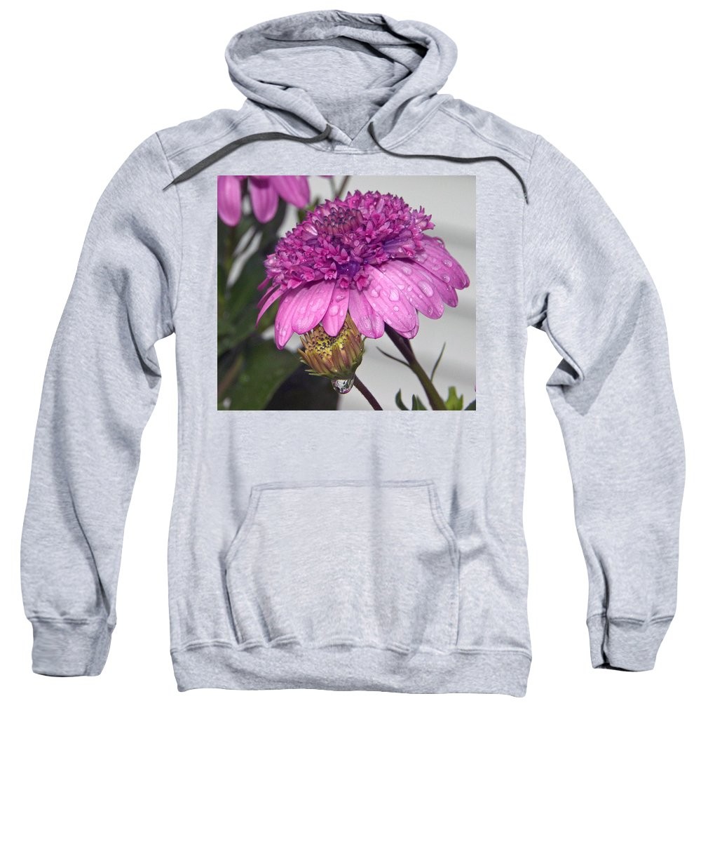 Close Up Sweatshirt featuring the photograph African Daisy by Catherine Melvin