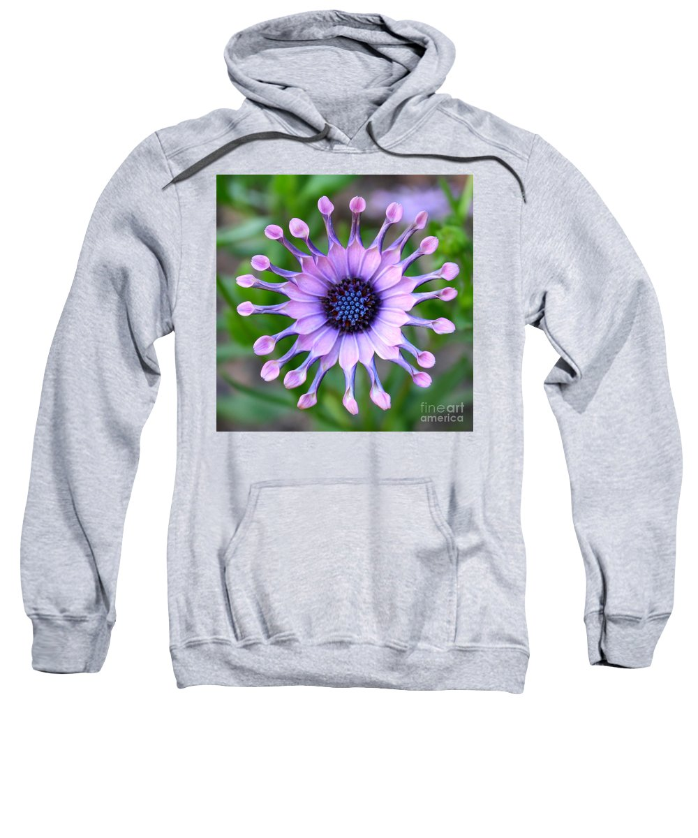 Daisy Sweatshirt featuring the photograph African Daisy - Square Format by Carol Groenen