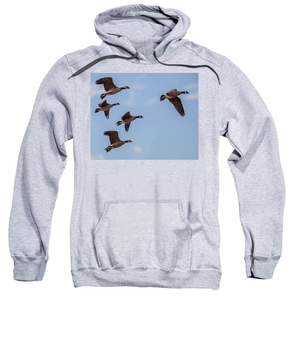 Aleutian Geese Sweatshirt featuring the photograph Aleutian Geese by Brian Williamson