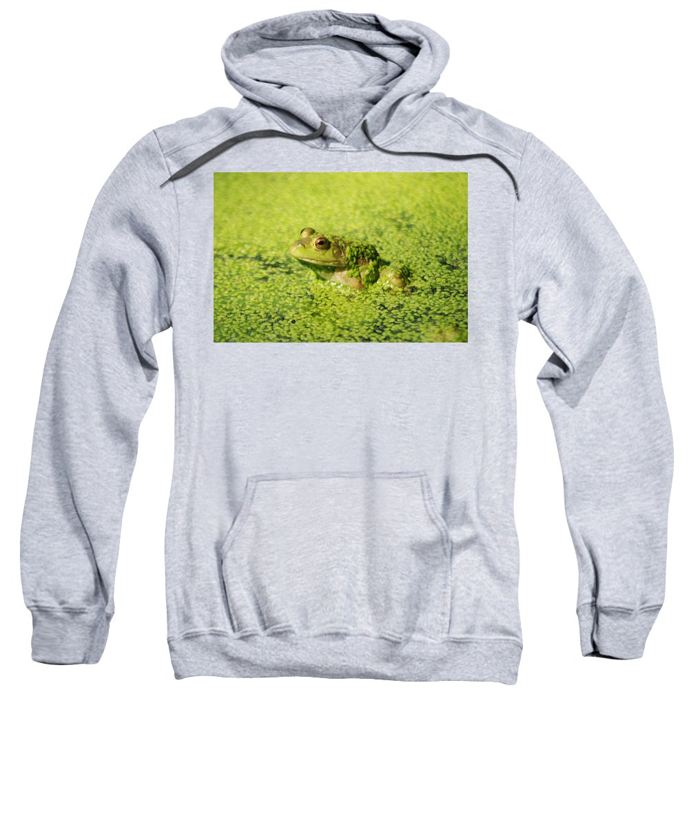 Green Algae Sweatshirt featuring the photograph Algae Covered Frog by Optical Playground By MP Ray