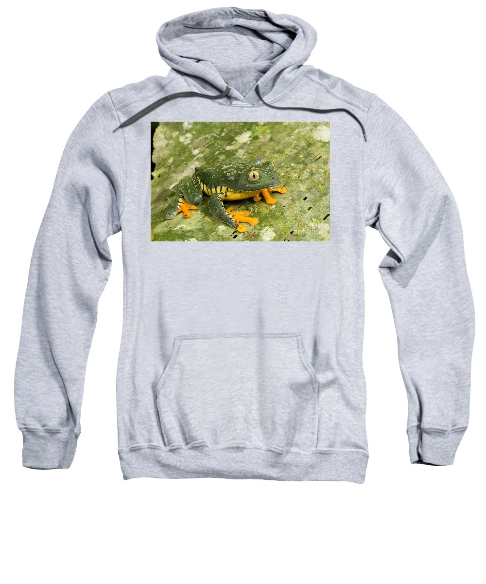 Amazon Leaf Frogs Sweatshirt featuring the photograph Amazon Leaf Frog by Gregory G Dimijian MD