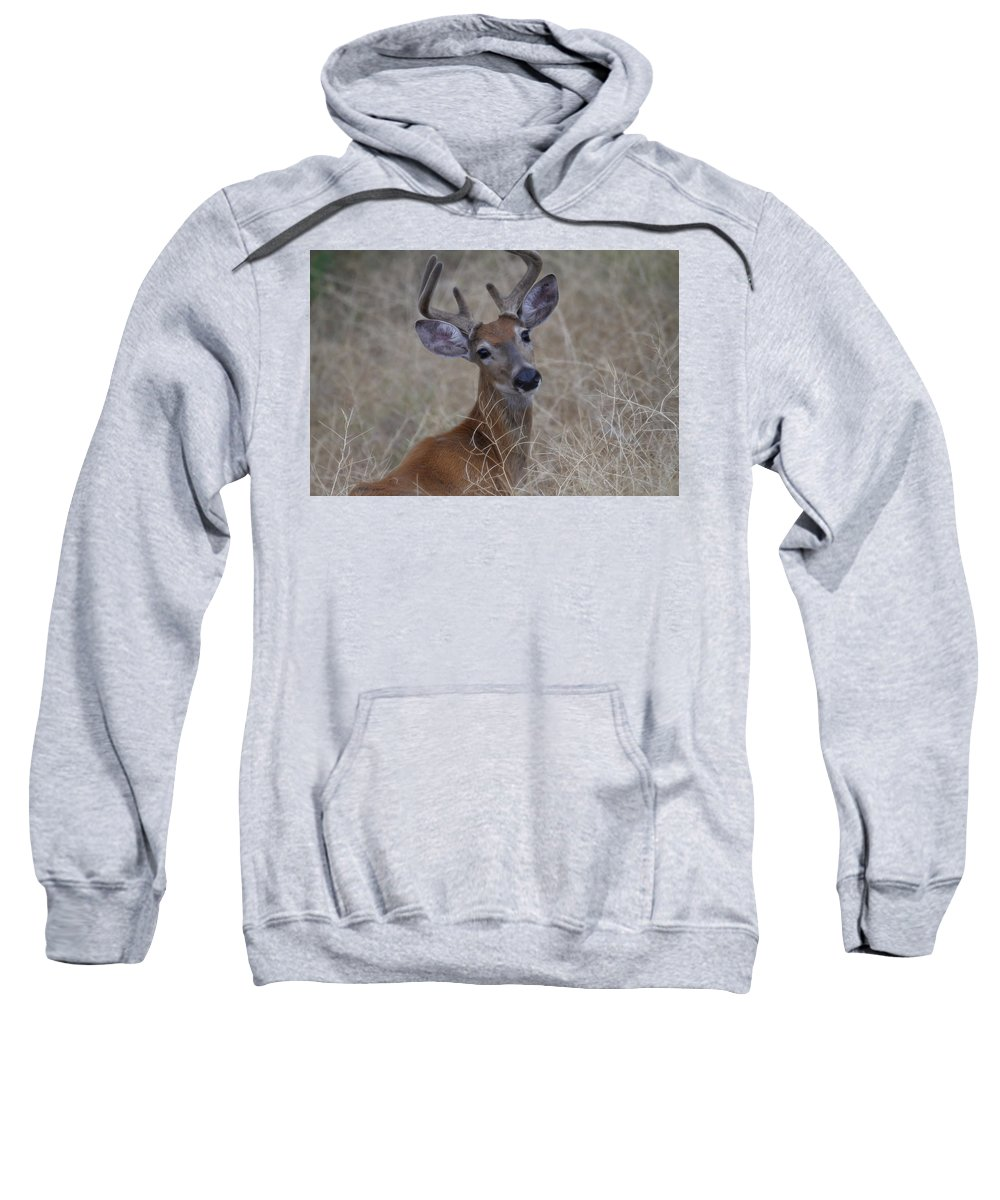 White Tail Deer Sweatshirt featuring the photograph Among The Brush by Steve McKinzie