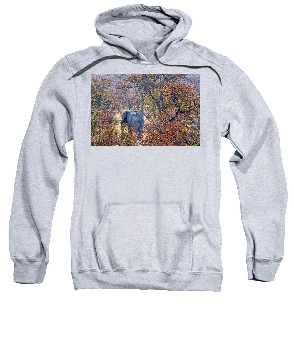 Nobody Sweatshirt featuring the photograph An Elephant Making Its Way by David Santiago Garcia