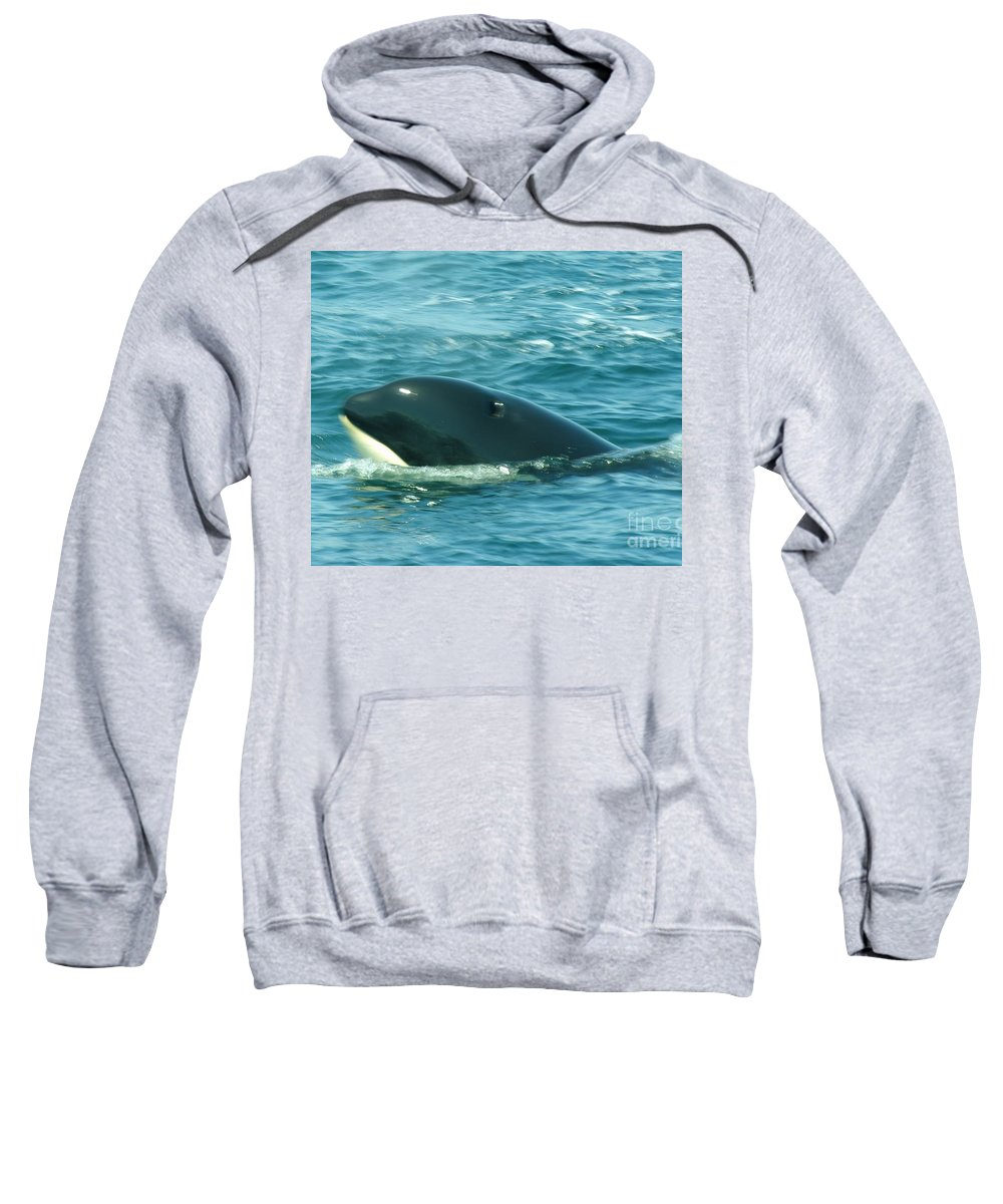 Whales Sweatshirt featuring the photograph An Orca Surfaces by Jeff Swan