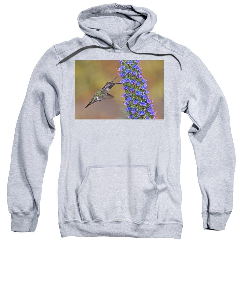 Bird Sweatshirt featuring the photograph Anna Hummer Sugar Time by Leslie Reagan - Joy To The Wild Photos