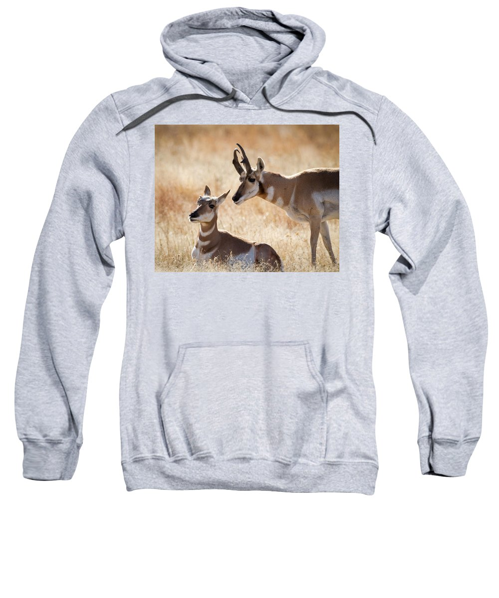 Antelope Sweatshirt featuring the photograph Antelope Love by Jack Bell