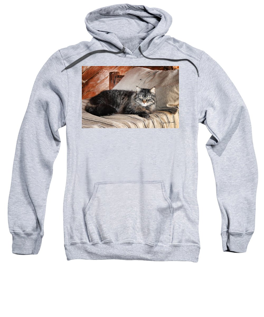 Kitty Sweatshirt featuring the photograph Antiquity Kitty by Sylvia Thornton