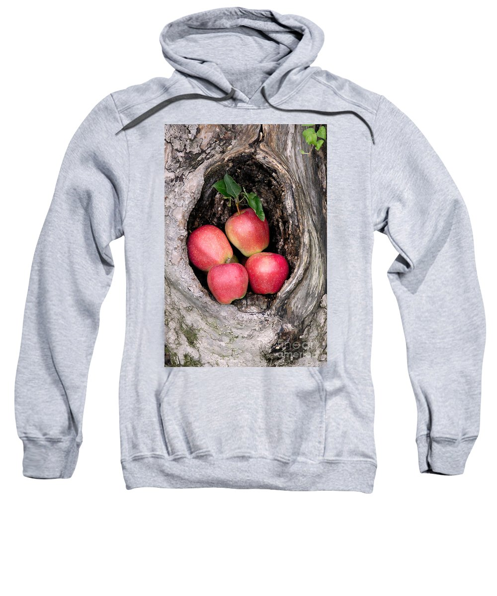 Apple Sweatshirt featuring the photograph Apples In Tree by Anthony Sacco