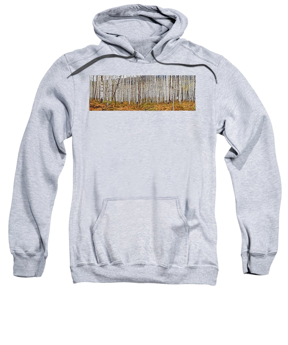 Colorado Photographs Sweatshirt featuring the photograph Aspen And Ferns by Gary Benson