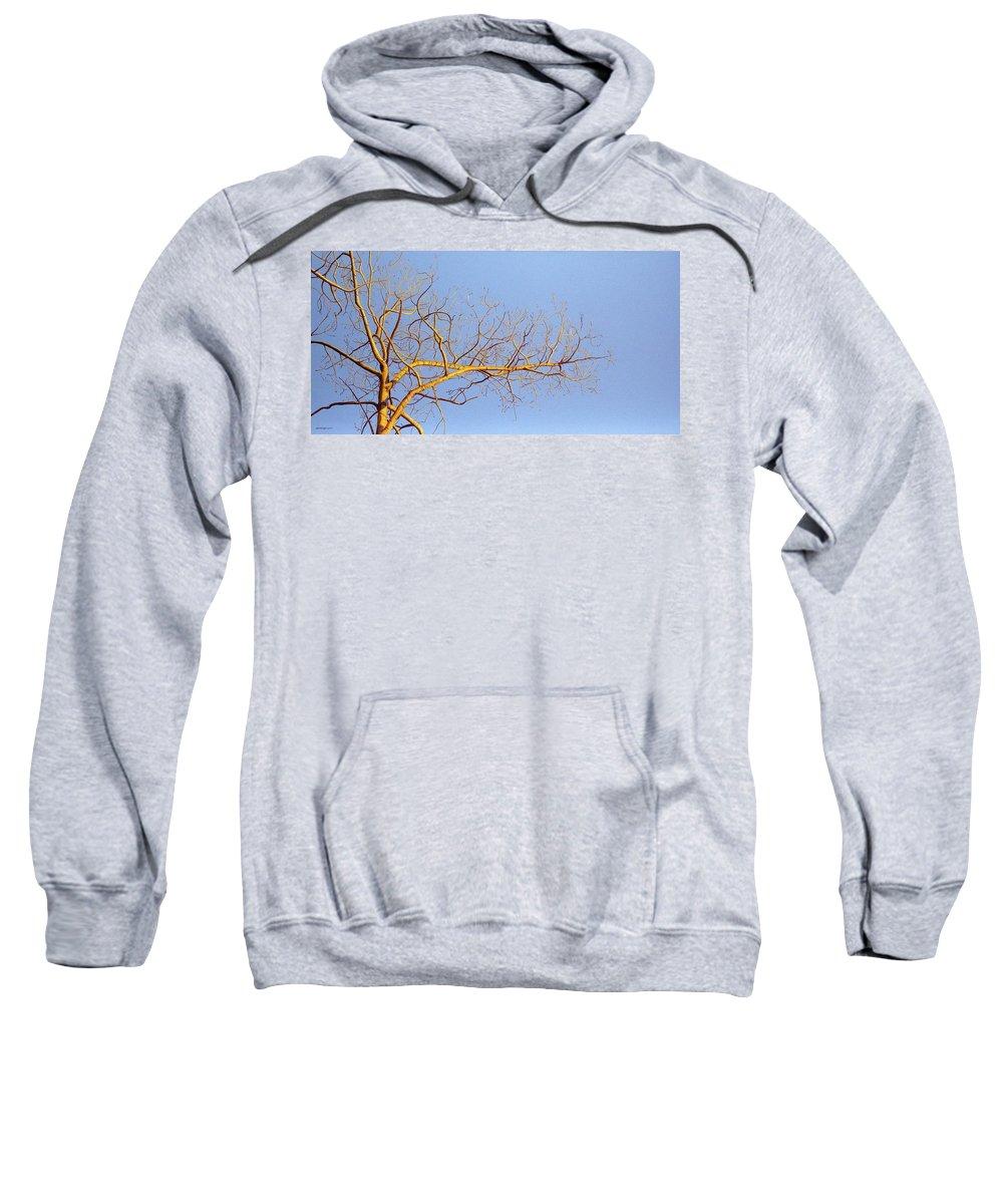 Aspen Painting Sweatshirt featuring the painting Aspen In The Autumn Sun by Elaine Booth-Kallweit