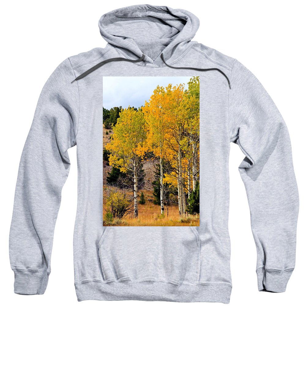Aspen Tree Sweatshirt featuring the photograph Aspen Meadows by Athena Mckinzie