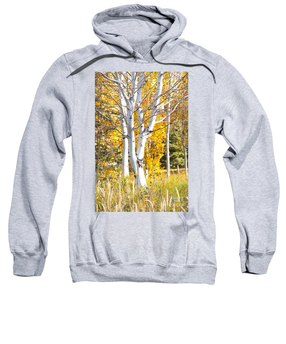 Utah Sweatshirt featuring the photograph Aspens In Fall by David Millenheft