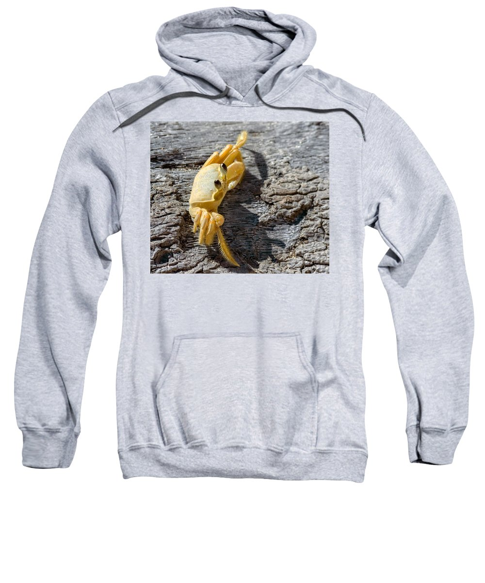Crab Sweatshirt featuring the photograph Attitude by Garvin Hunter