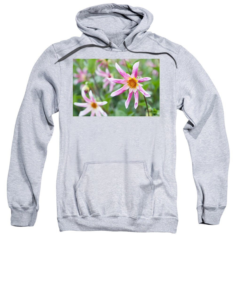 Miguel Sweatshirt featuring the photograph August Flower Gardens by Miguel Winterpacht