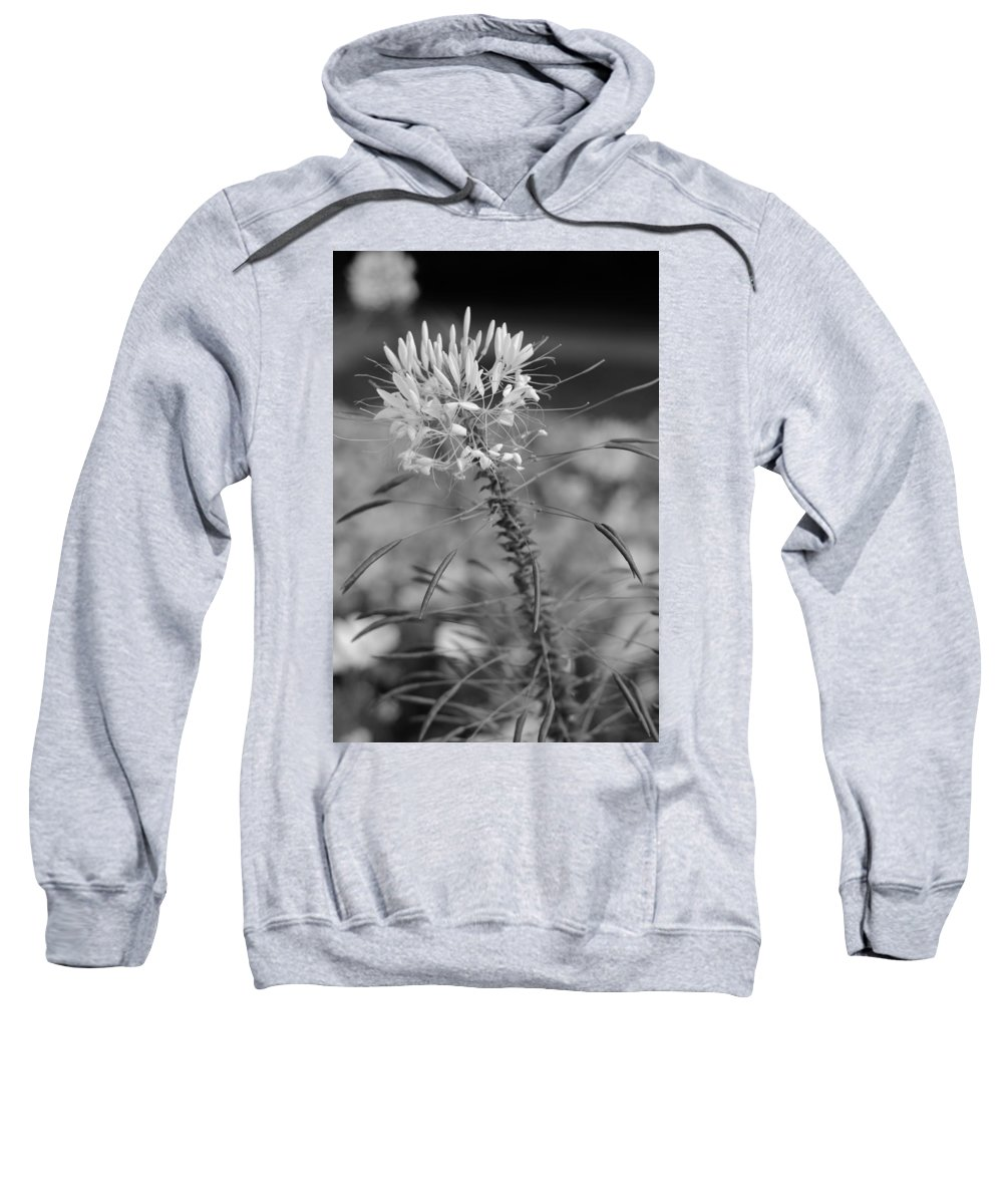 Miguel Sweatshirt featuring the photograph August Garden by Miguel Winterpacht