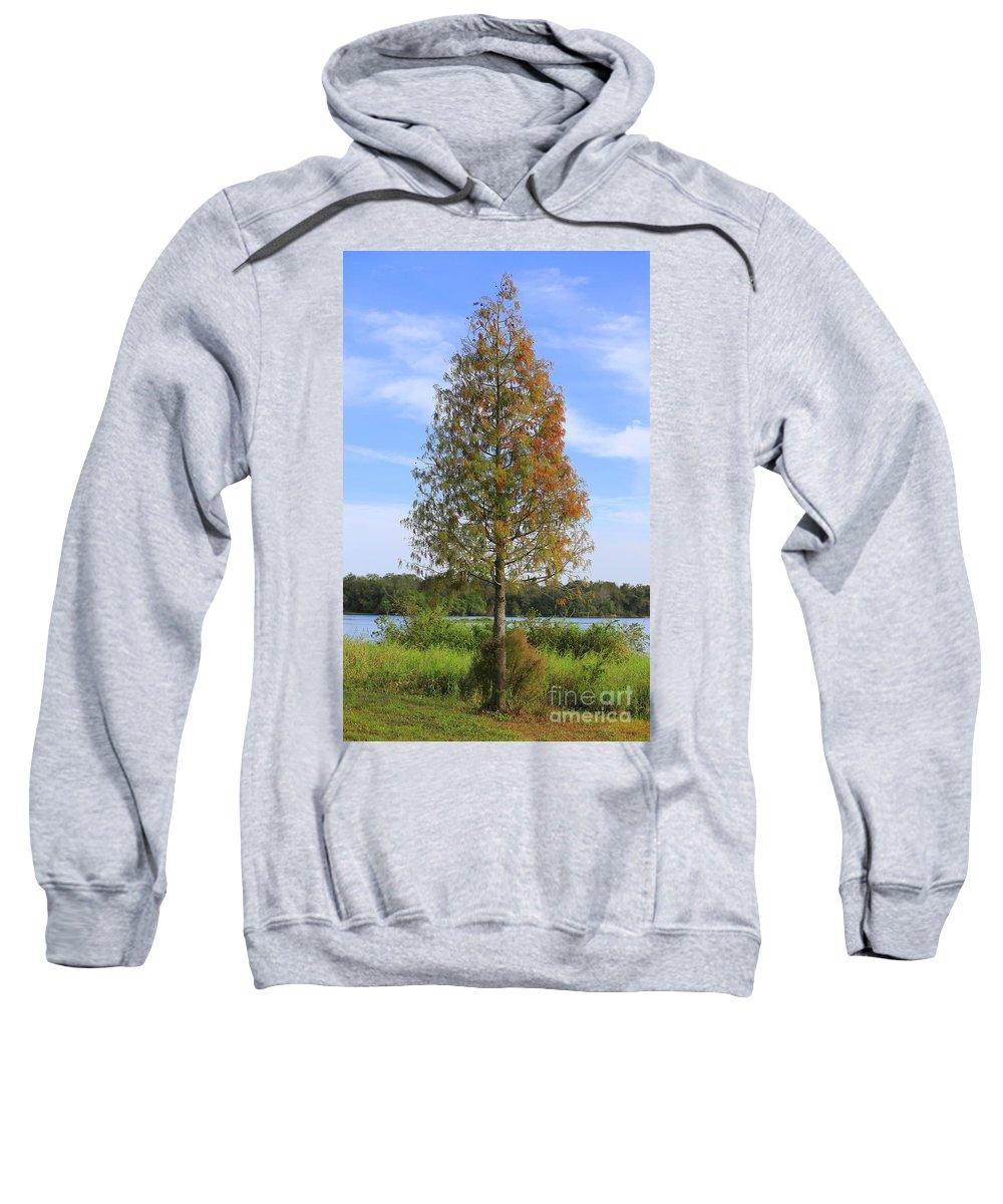 Cypress Tree Sweatshirt featuring the photograph Autumn Cypress Tree by Carol Groenen