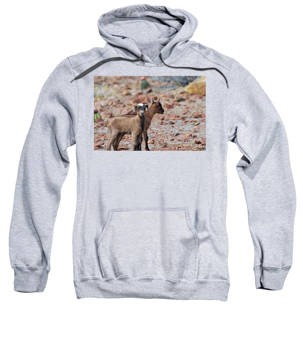Goat Sweatshirt featuring the photograph Baby Goat Pair by DejaVu Designs