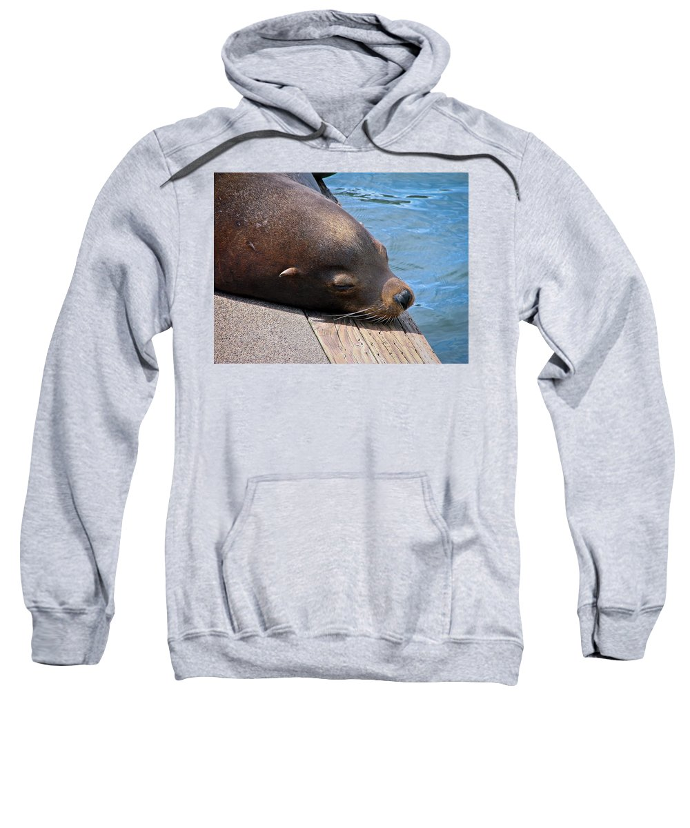 Sea Lion Sweatshirt featuring the photograph Baby I'm A Chillin' by Athena Mckinzie