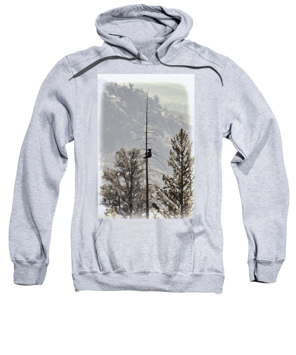 Baby Tree Hugger Sweatshirt featuring the photograph Baby Tree Hugger by Wes and Dotty Weber