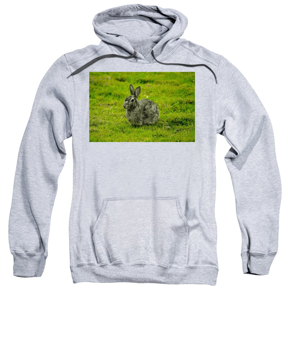 Sweatshirt featuring the photograph Backyard Bunny In Black White And Green by Daniel Thompson