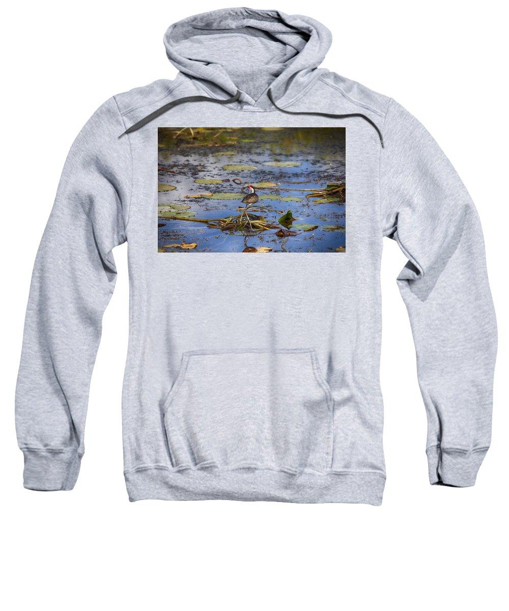 Jesus Christ Bird Sweatshirt featuring the photograph Balancing Act V5 by Douglas Barnard