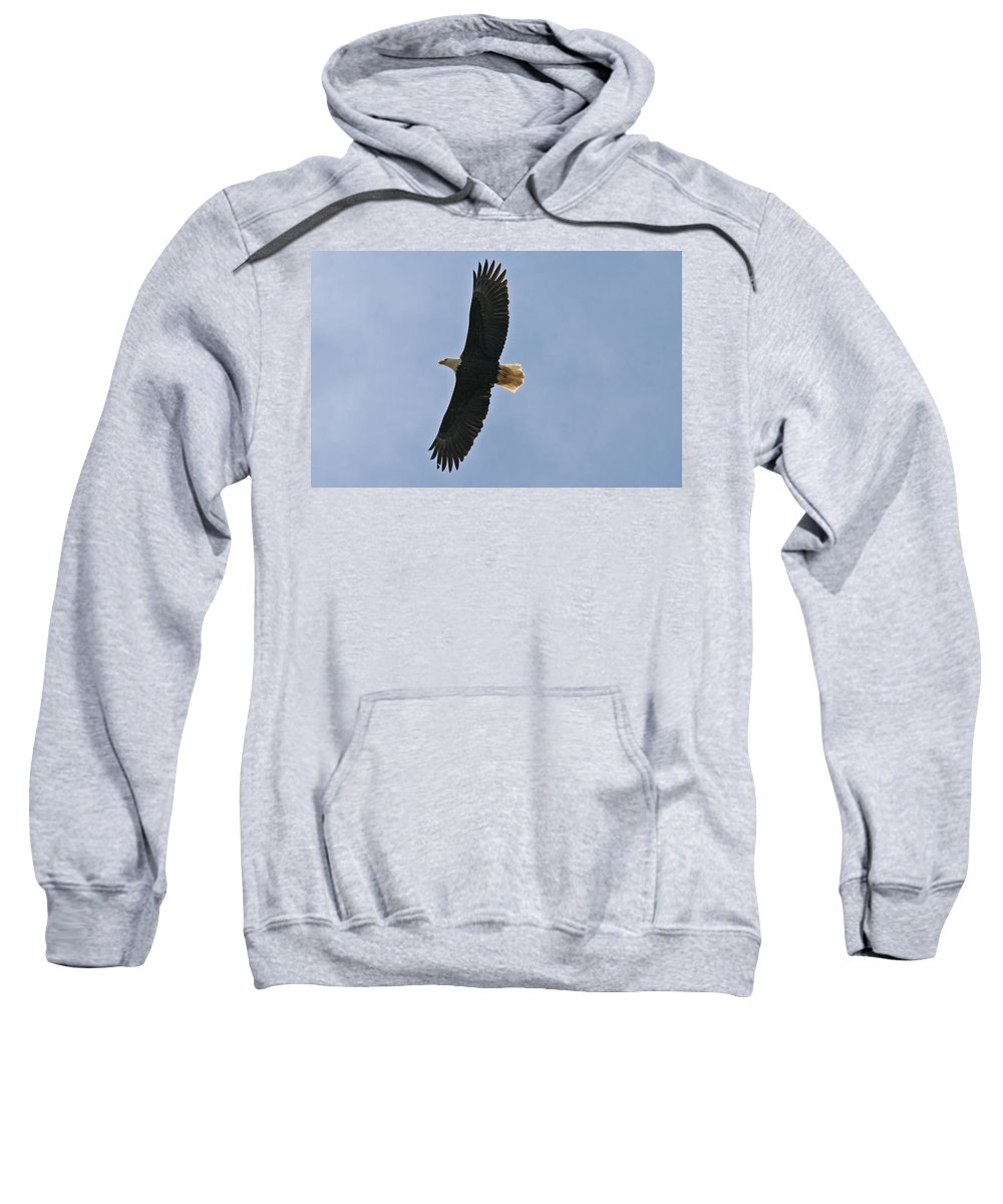 Eagles Sweatshirt featuring the photograph Bald Eagle In Sandspit Bc by Elizabeth Rose