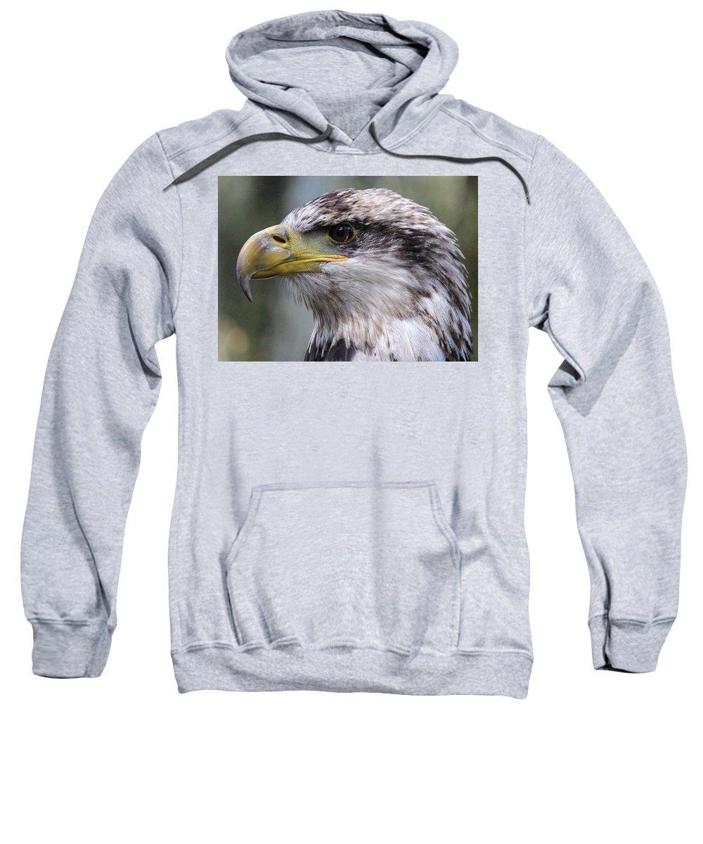 Bald Eagle Sweatshirt featuring the photograph Bald Eagle - Juvenile - Profile by Randy Hall