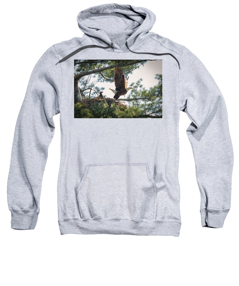 Bald Eagle Sweatshirt featuring the photograph Bald Eagle With Eaglet by Everet Regal